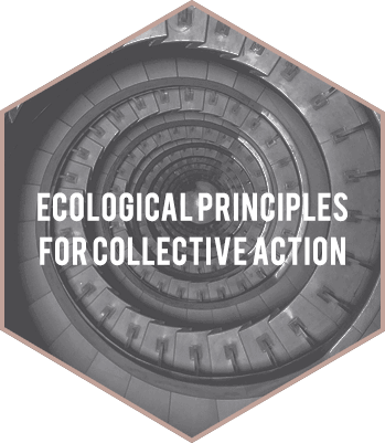 Ecological Principles for Collective Action